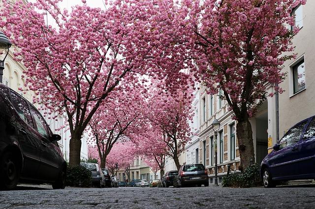 Bonn rosa Straße